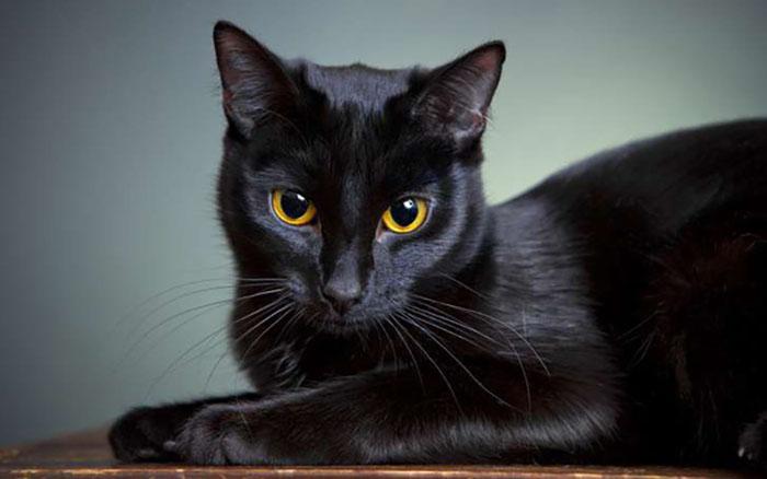 Mơ thấy mèo đen - SV88