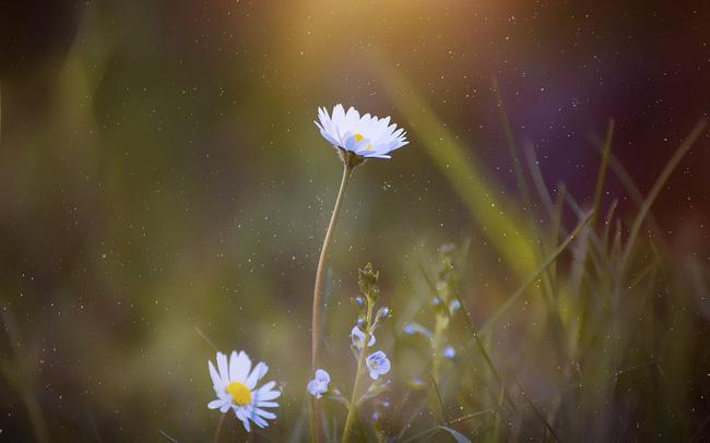 bông hoa và những con số may mắn
