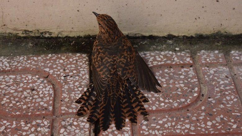 Chim lớn bay vào nhà