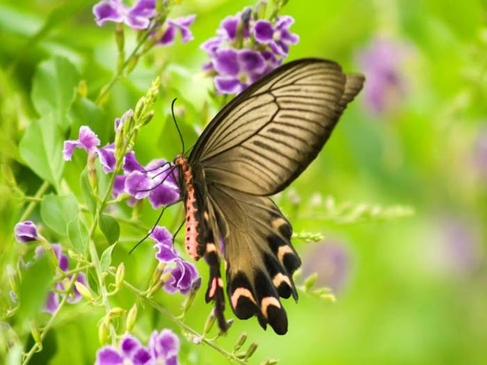 Giải mã giấc mơ thấy bươm bướm