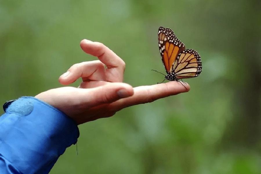 Ý nghĩa giấc mơ thấy bươm bướm