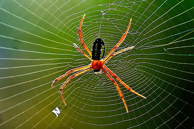 Mơ thấy con nhện là điềm báo điều gì?