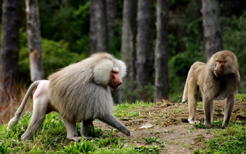 ý nghĩa của giấc mơ thấy khỉ