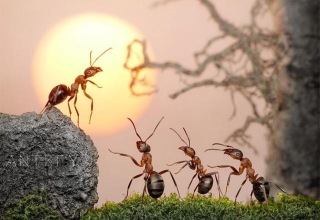 mơ thấy kiến là điềm gì