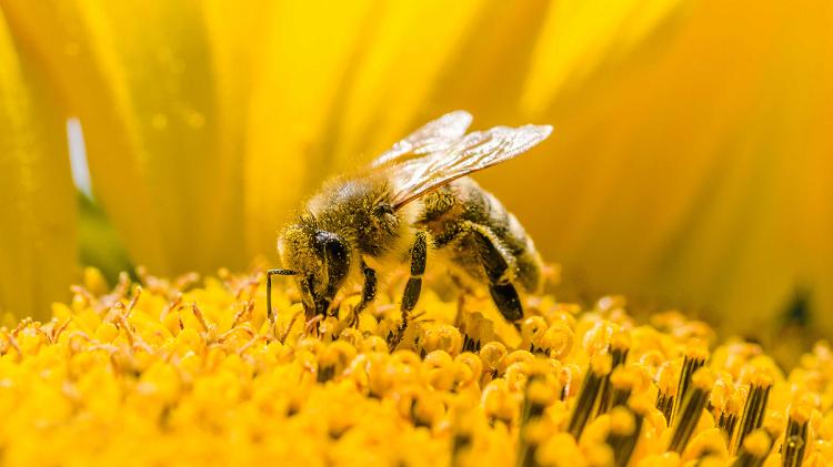 giải mã giấc mơ thấy con ong