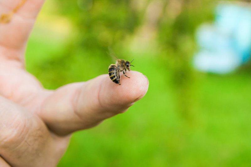 chiêm bao thấy con ong